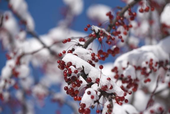 red berrysm_8099.jpg