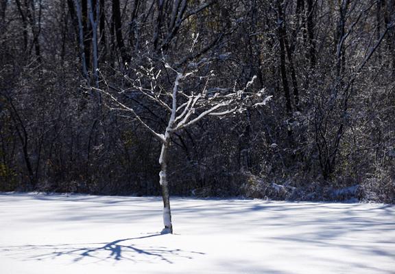 tree shadowsm_8035.jpg