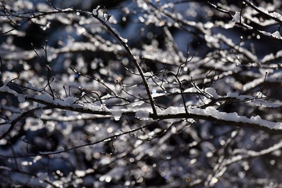 branch icesm_8180.jpg