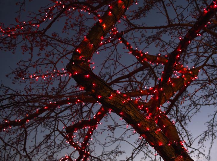 red treesm_9463.jpg