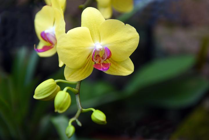 orchid_sm5927.jpg