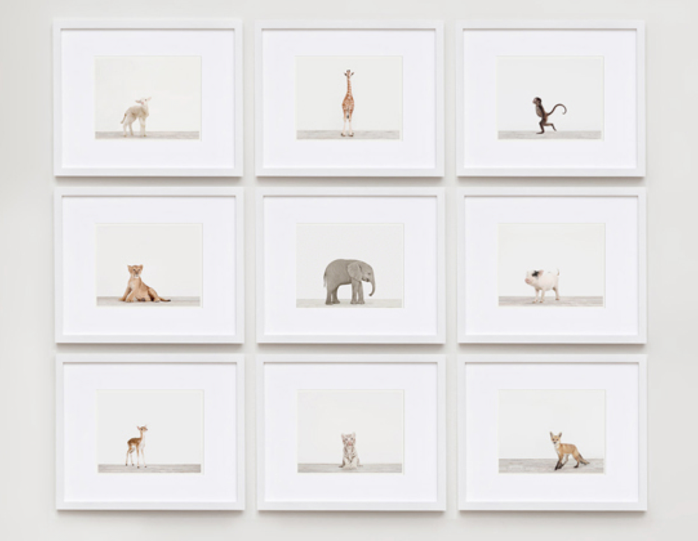 The_Animal_Print_Shop_by Sharon Montrose_9grid.png