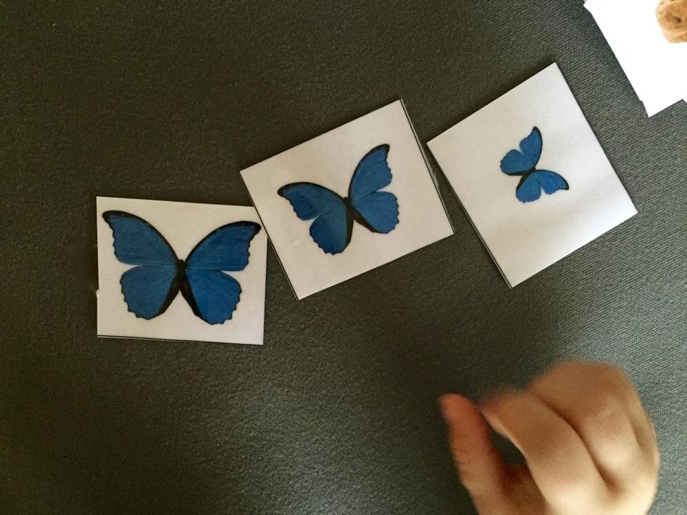 Montessori for toddlers_Sorting_4.jpg