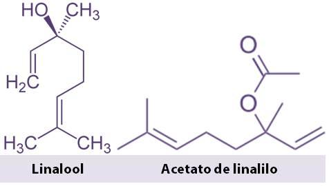moléculas en aceite de lavanda