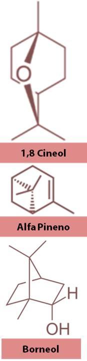 moleculas en aceite de romero