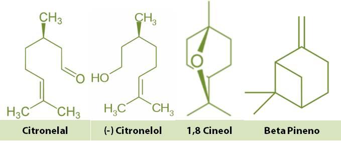 moleculas en aceite de eucalipto