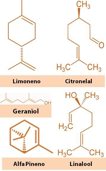 moleculas en aceite de pomelo