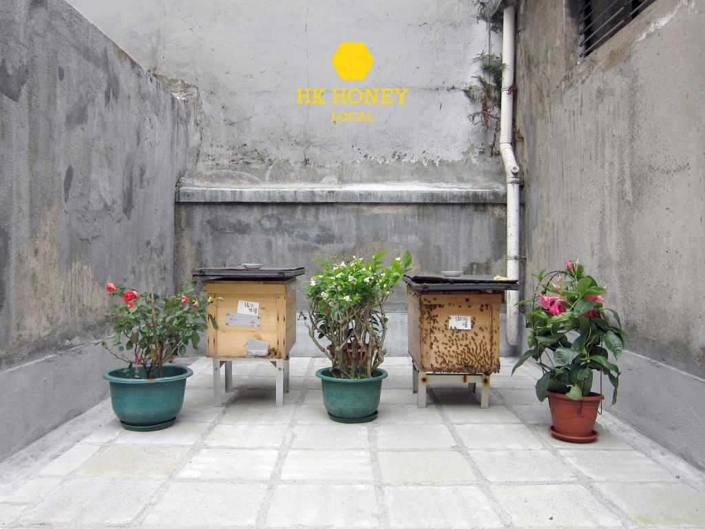 hk_honey-urban_bee_farm