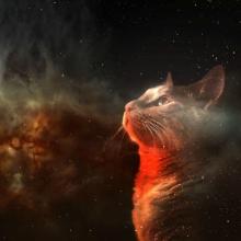 redspacecat.jpg