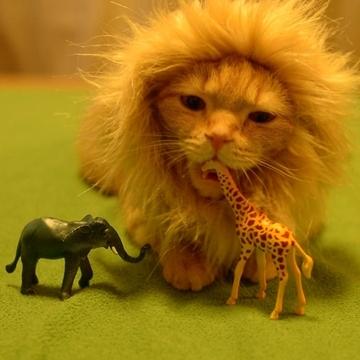 lioncat2.jpg