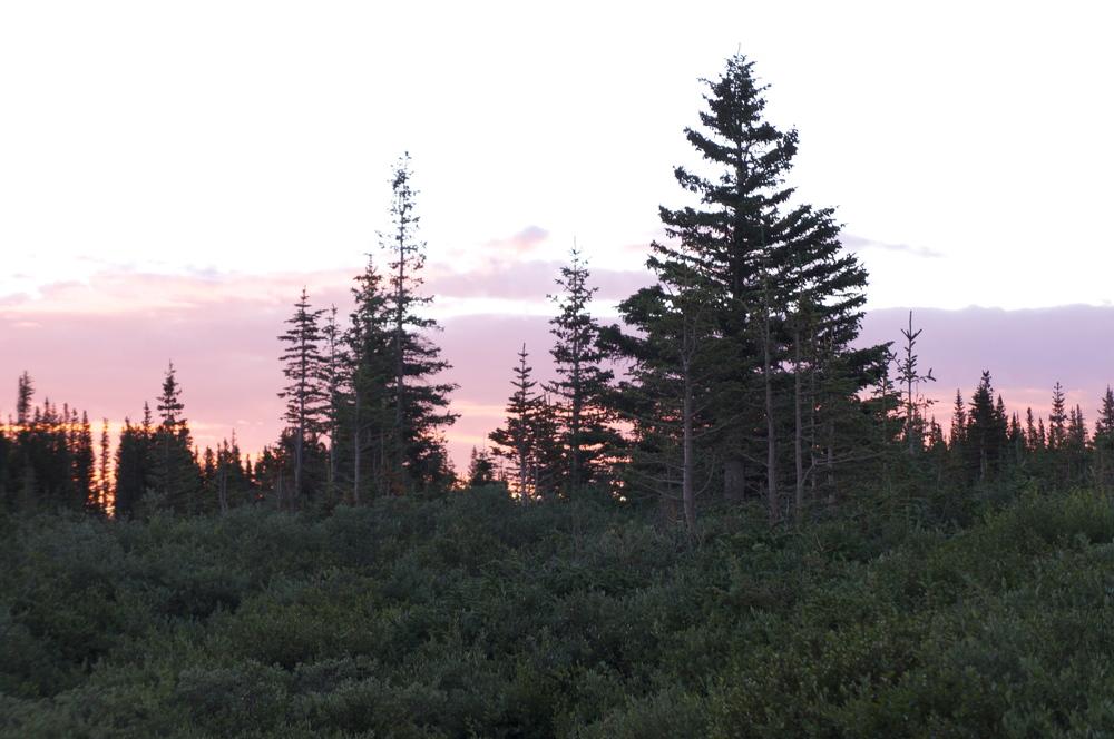 Twin Peaks CO
