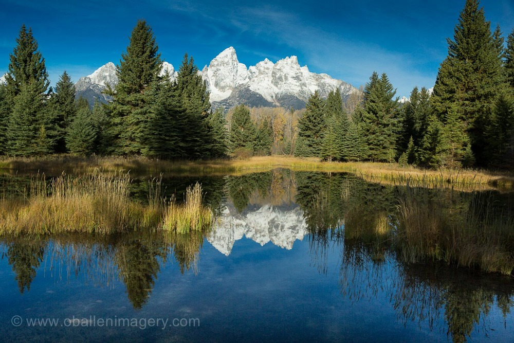 Schwabacher's Landing updated. Now there are reeds  in the reflection pool. We will never again have the iconic image like the one on the main page of the website.