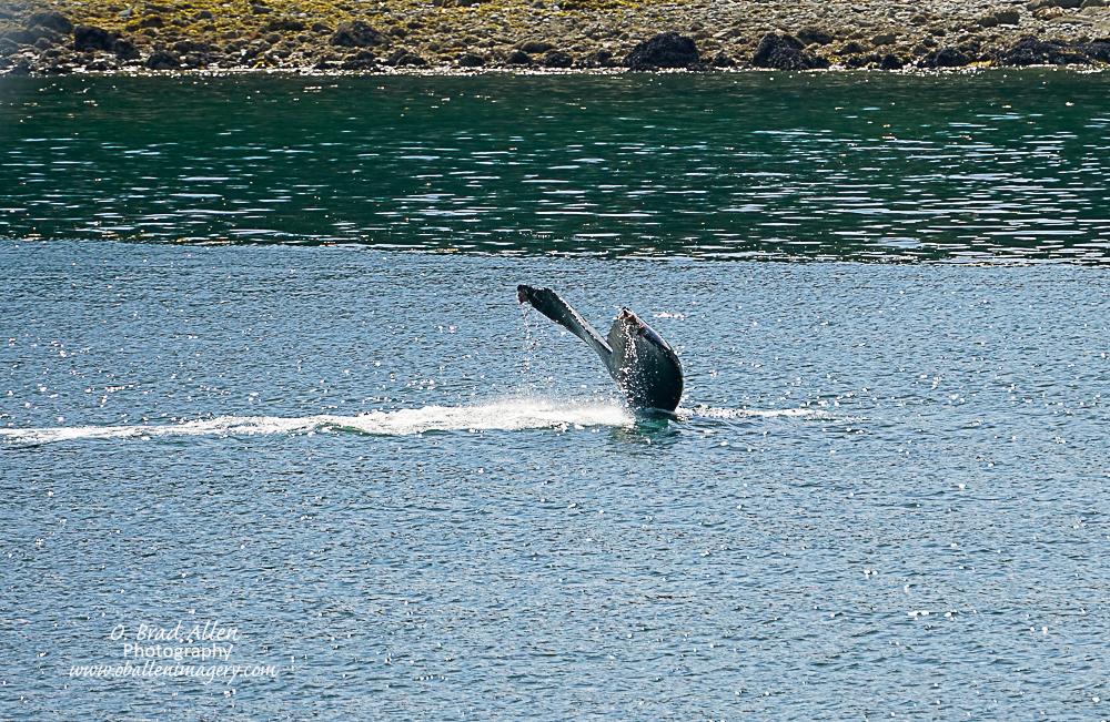 I had a great desire to see a whale tail and the captain made certain that I was able to see a couple.