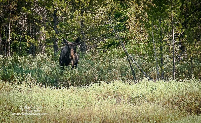 Yellowstone-28.jpg
