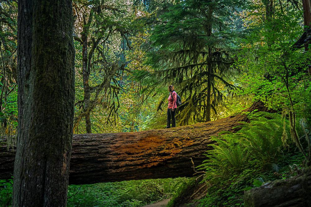 Lisa Tree.jpg