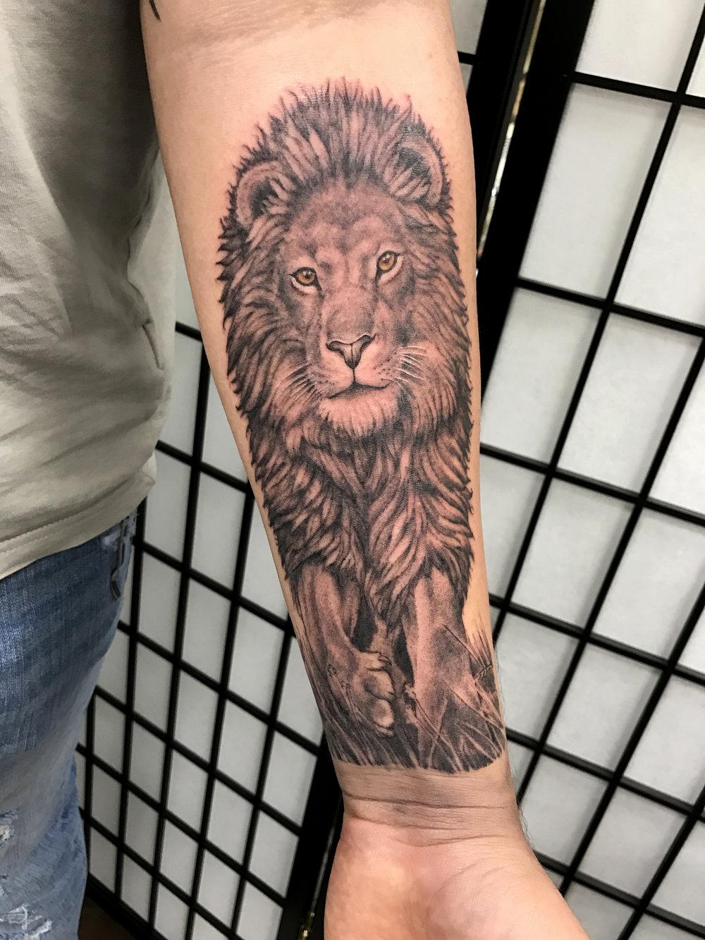 anthony lion.jpg
