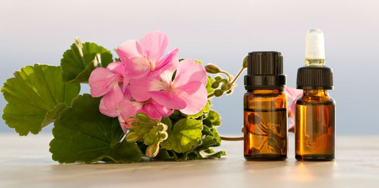 aromatherapie-les-vertus-de-l-huile-essentielle-de-geranium.jpg