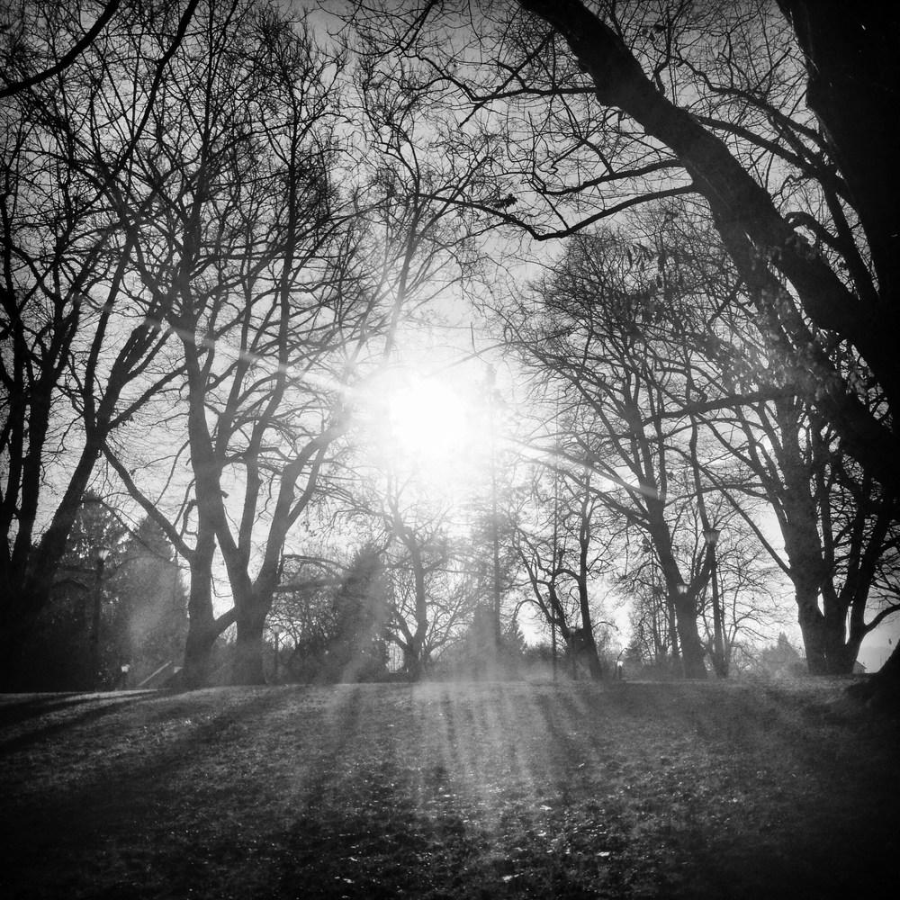 tree sol.jpg
