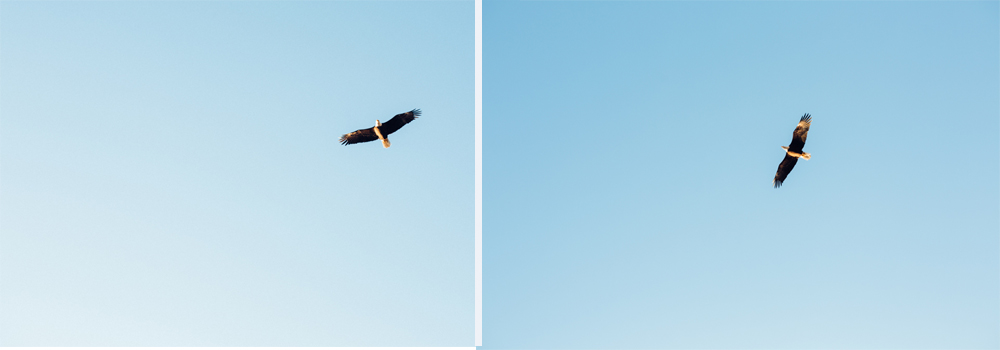eagle combo.jpg