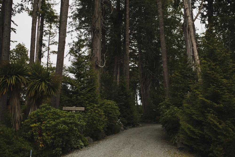 pathway through woods to wedding at seashell beach tofino