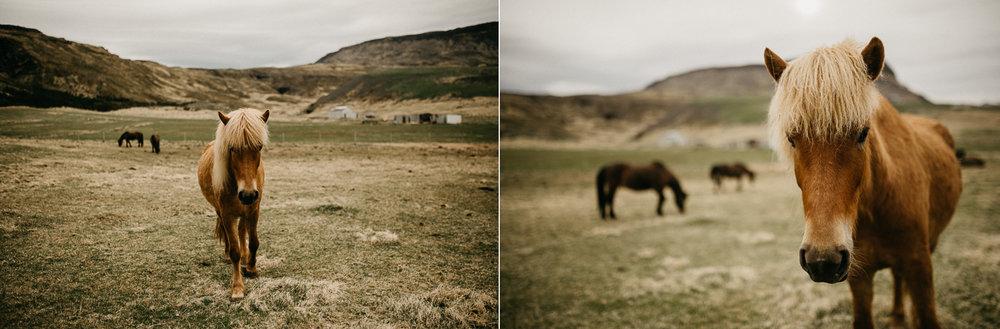 iceland engagement wedding photographer horse.jpg