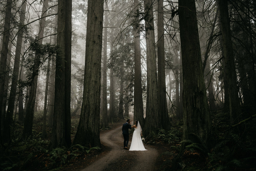 Bride and Groom with the trees in a foggy forest Galiano Island Wedding