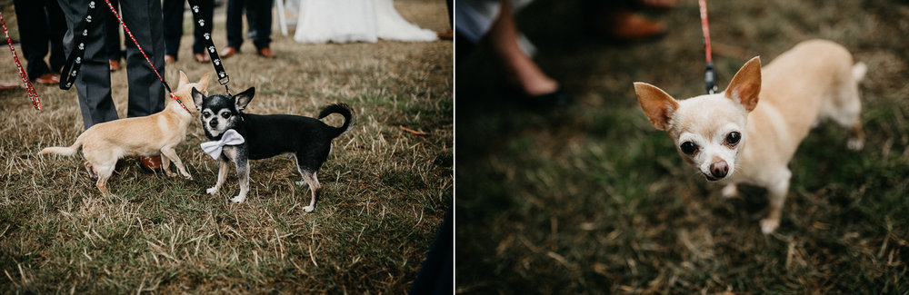 Dogs at Galiano Inn Wedding photographer