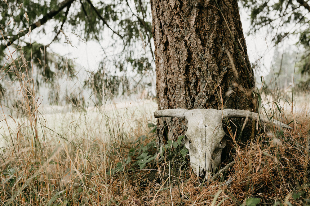 skull near tree at Bird's Eye Cove, Vancouver Island wedding photographer