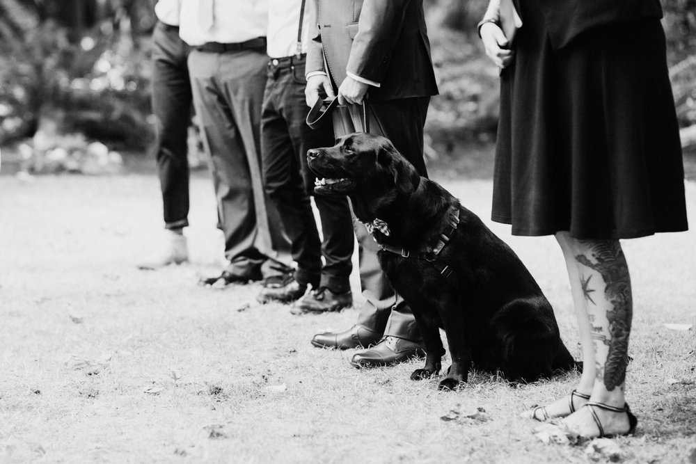 Bride and grooms dog stands up at wedding ceremony