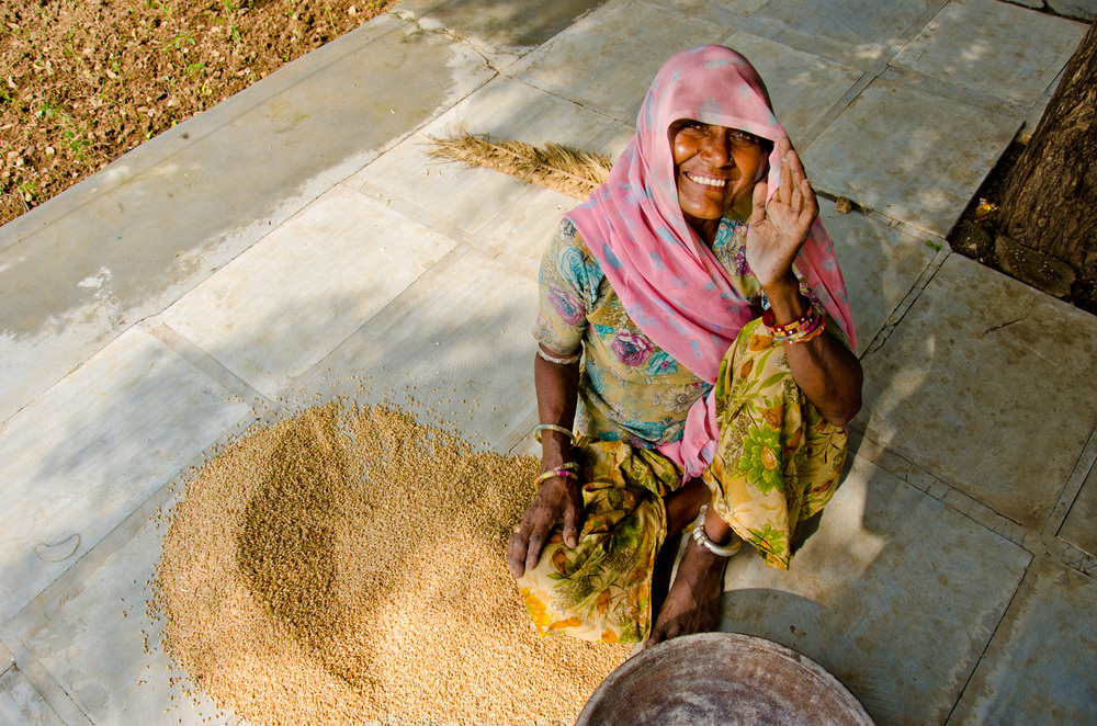 A farmer from Rajasthan with some of her harvested wheat