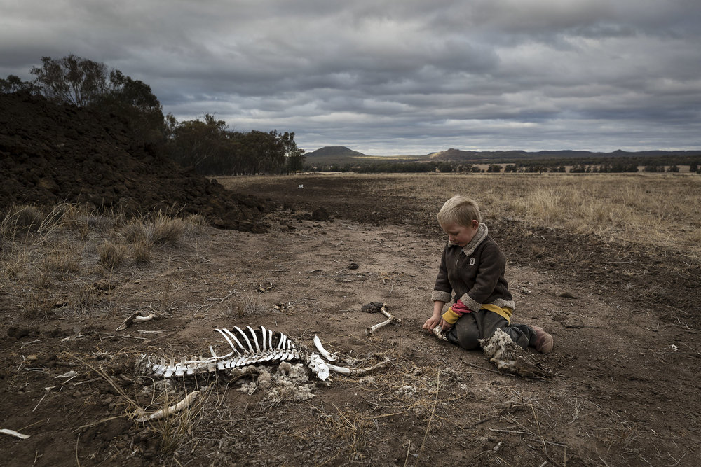 Harry Taylor, 6, played with the bones of dead livestock in Australia, which has faced severe drought. Source:  New York Times
