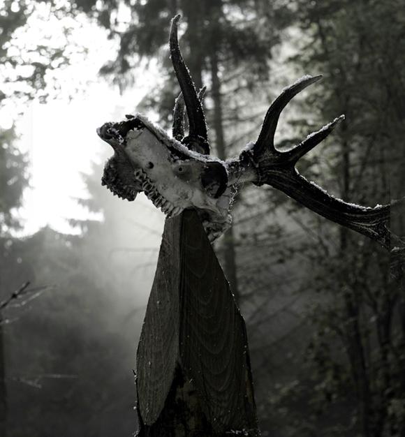 121112-skull-580.jpg