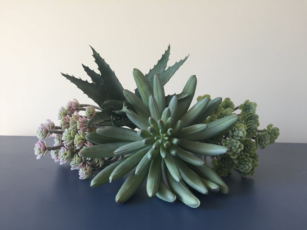 succulents-fake