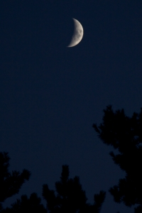 crescent_moon_over_pines