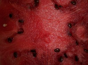 watermelon_seeds