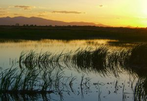 marsh_sunset