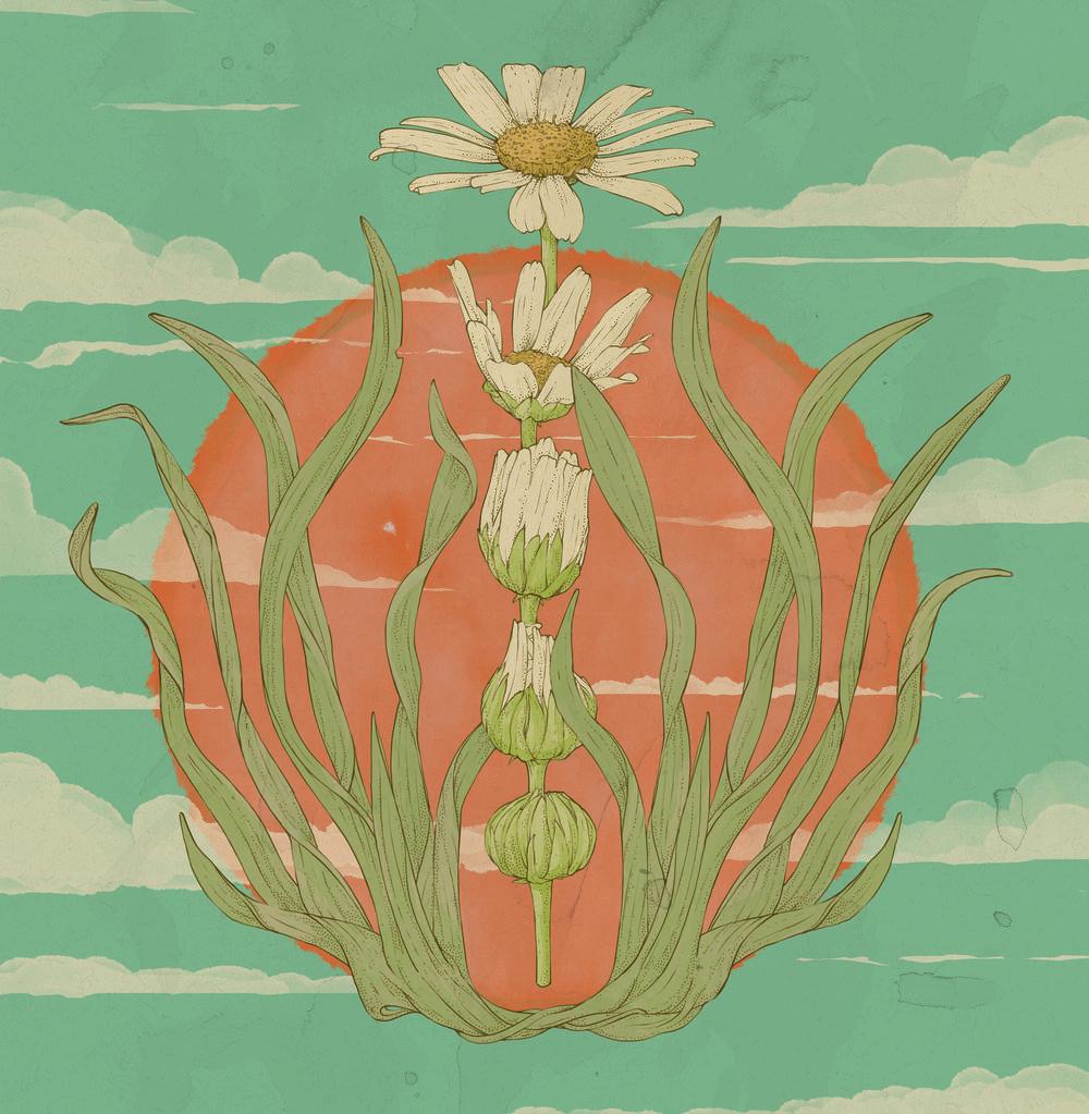 Flower Illo.jpg