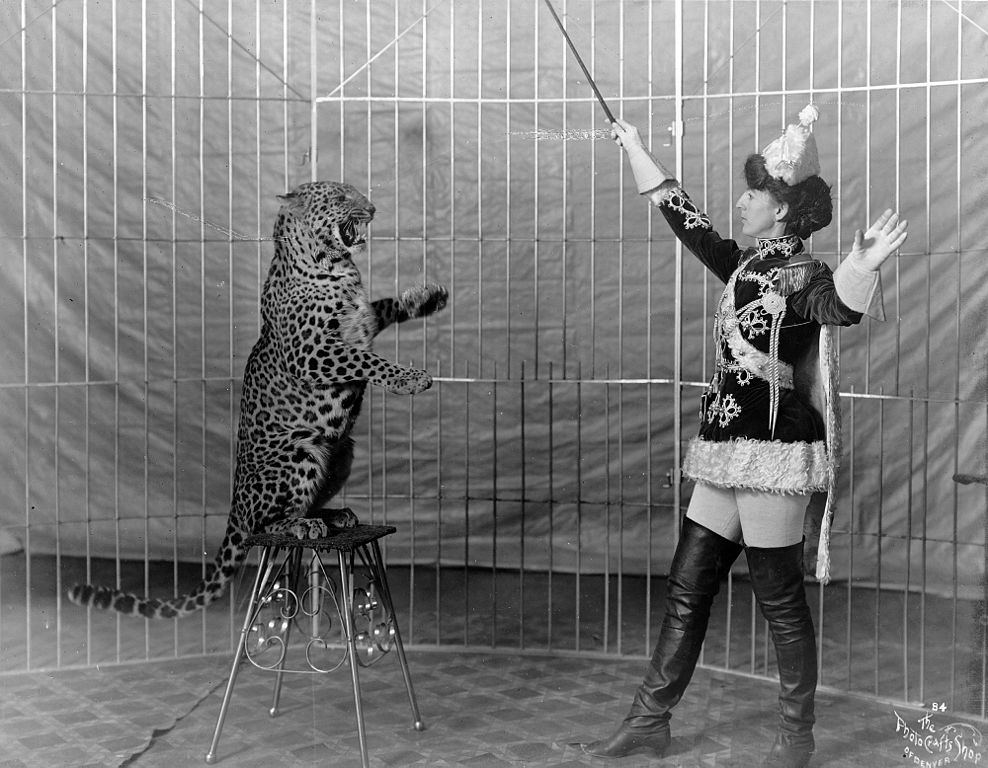 Vallecita the leopard trainer, 1906.
