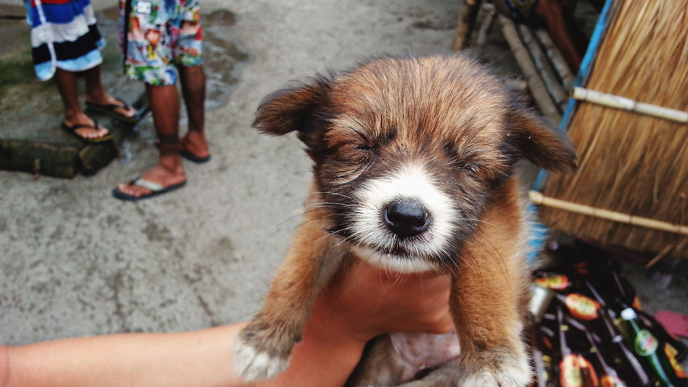 The newest pup in Pundaquit. :)