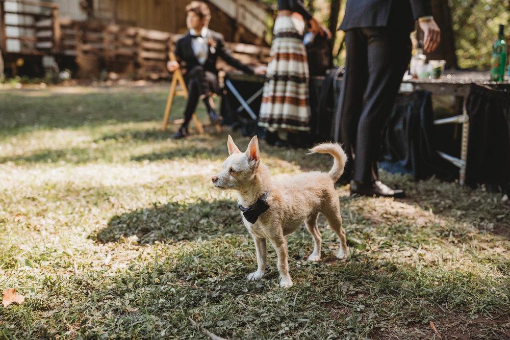 Ben + Alisa -- Dawn Ranch Wedding -- Whitney Justesen Photography-274.jpg