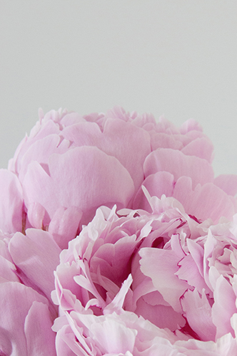 Peonies, 2015 / © Renae Smith