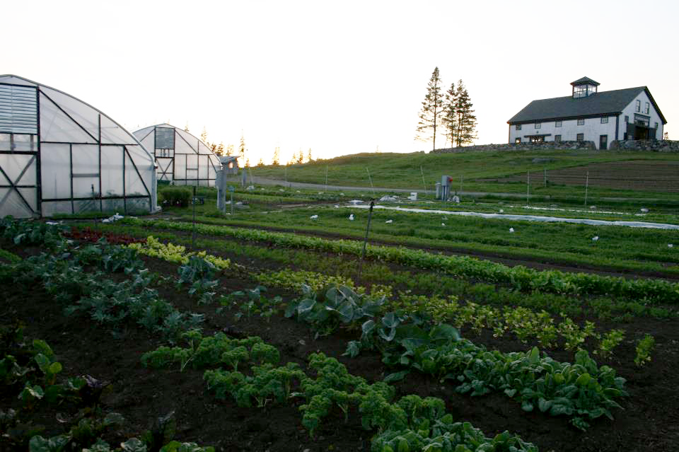 turner farm and vegetable garden.png