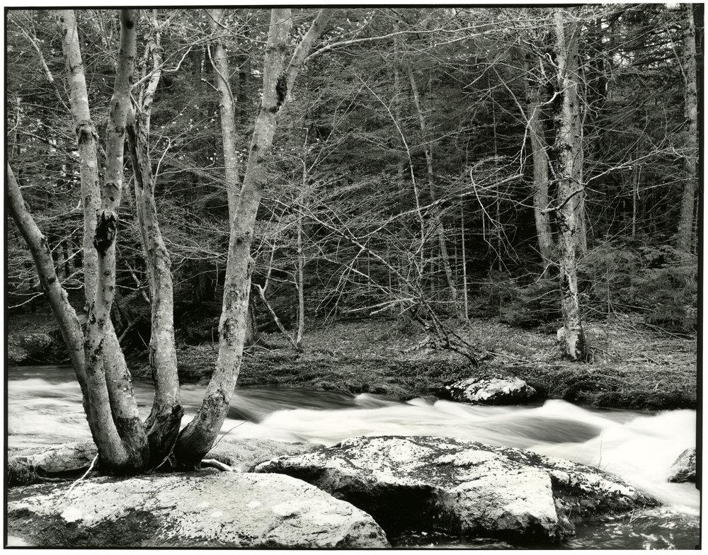 Cathance River Preserve II