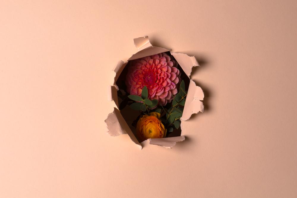 vasili-gavre-flowersbehind02.png