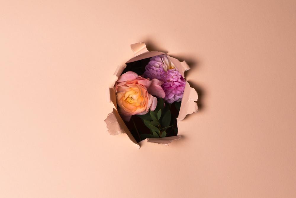 vasili-gavre-flowersbehind03.png
