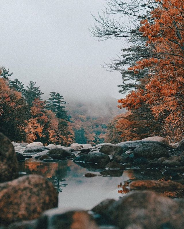 """Only those who risk going too far can possibly find out how far they can go."" 🍁⠀"