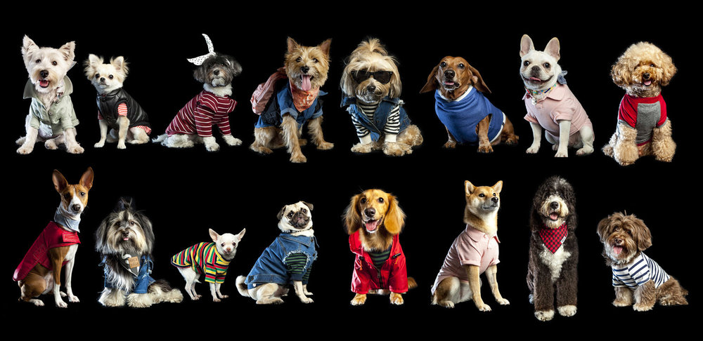 Furry Fashionistas Give New Meaning to the Phrase 'Catwalk' at Columbus Circle - New York 1, September 13th, 2016