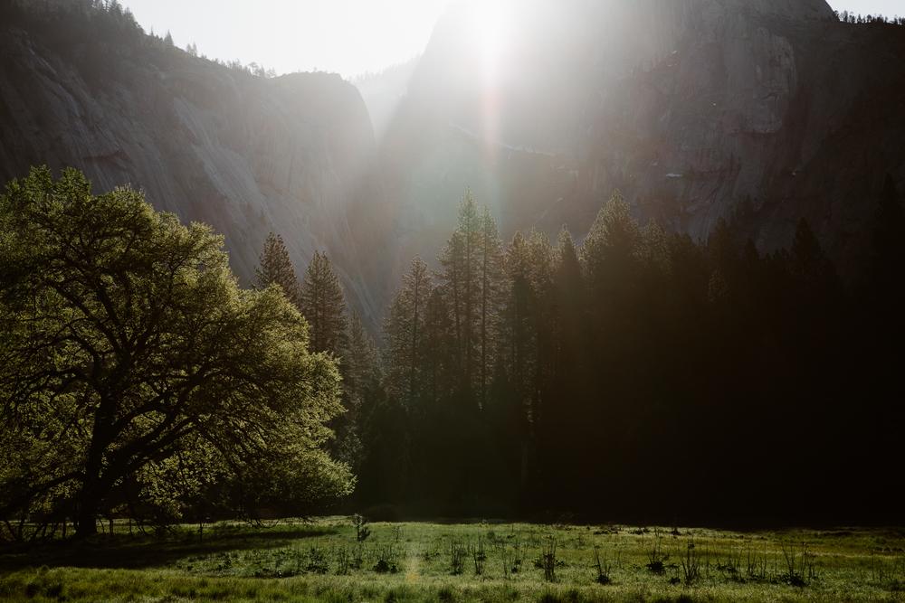 20160417_Yosemite_0674.jpg