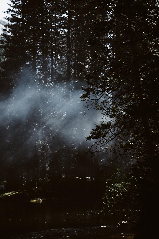 20160417_Yosemite_0692.jpg