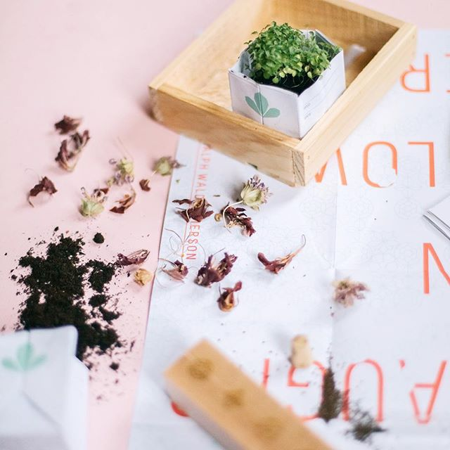 Can it be that spring is really just around the corner? We may be preparing for more snow on the east coast, but it's almost time to start seeds indoors. . Our Edible Flower seed kits come with a beautiful laser etched wooden block with vials for displaying flowers when they bloom and a gorgeous poster with harvest recipes. . #edibleflowers #seeds #seedkit #seedstarting #dsfloral #spring #pink #calendula #starflower #lemonmint #nasturtium